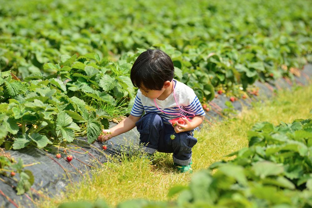 果物狩り(定山渓八剣山)