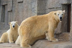 円山動物園