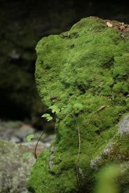苔の洞門(千歳市)