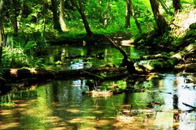 恵庭公園原始の森(恵庭市)