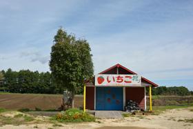 イチゴ農家(北広島市)