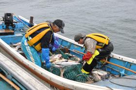 サケ漁(石狩市)