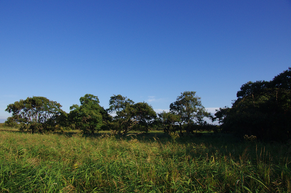 マクンベツ湿原(石狩市)